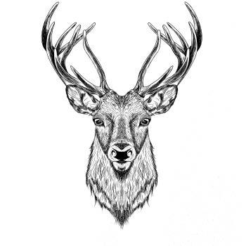 Obrázek jelena